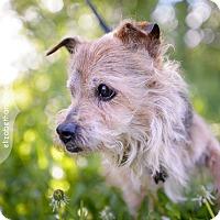 Adopt A Pet :: Archie 3363 - Toronto, ON