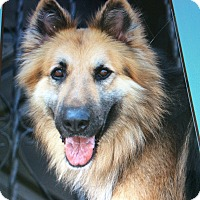 Adopt A Pet :: MIKEY VON MITTWEIDA - Los Angeles, CA