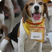 Adopt A Pet :: April II - Tampa, FL