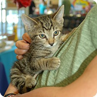 Adopt A Pet :: Amber - Great Mills, MD