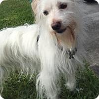 Adopt A Pet :: Buckey - Homestead, FL