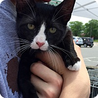 Adopt A Pet :: Olivia - Trenton, NJ