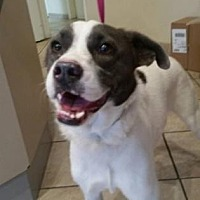 Adopt A Pet :: Willa - Scottsdale, AZ