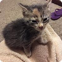 Adopt A Pet :: Roberta - Basehor, KS