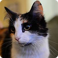 Adopt A Pet :: Chloe - Calgary, AB