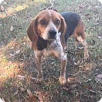 Adopt A Pet :: Bess II - Tampa, FL