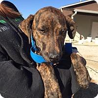 Adopt A Pet :: Aye - Windham, NH