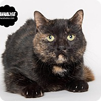 Adopt A Pet :: Annalise - Wyandotte, MI