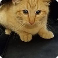 Adopt A Pet :: Denver 111019 - Joplin, MO