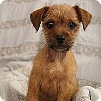 Adopt A Pet :: Buster - Homewood, AL