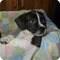 Adopt A Pet :: Bogart - ADOPTED!! - Antioch, IL