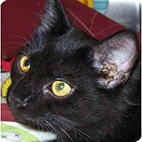 Adopt A Pet :: Mork - Annapolis, MD