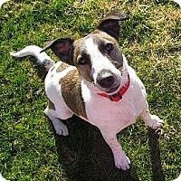 Adopt A Pet :: GABBY - Scottsdale, AZ