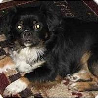 Adopt A Pet :: Sammy - Chandler, IN