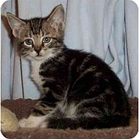 Adopt A Pet :: Scotty - Reston, VA