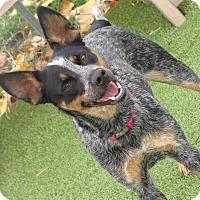 Adopt A Pet :: Sadie - Meridian, ID