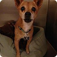Adopt A Pet :: Phoenix - Tustin, CA