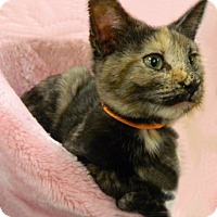 Adopt A Pet :: Indira - The Colony, TX