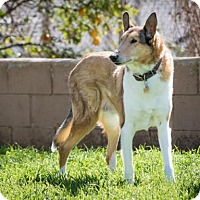 Adopt A Pet :: Bentley - Riverside, CA