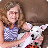 Adopt A Pet :: Gordon - Plain City, OH