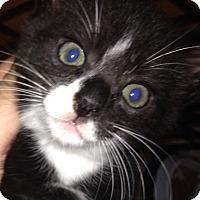 Adopt A Pet :: Tux - Long Beach, NY