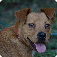 Adopt A Pet :: India - Midlothian, VA