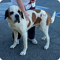 Adopt A Pet :: Moose - Lake Forest, CA