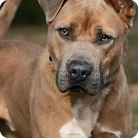Adopt A Pet :: El Rey - Nashville, TN