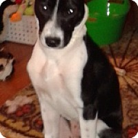 Adopt A Pet :: Sadie - Fort Collins, CO