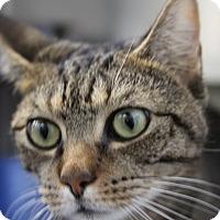 Adopt A Pet :: Jessie - Sarasota, FL