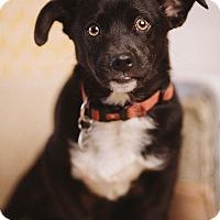 Adopt A Pet :: Frank - Portland, OR