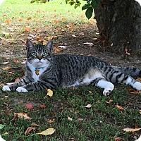 Adopt A Pet :: Tugger - Homewood, AL
