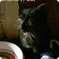 Adopt A Pet :: CHARLIE H.. - detroit, MI