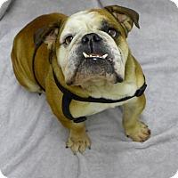 Adopt A Pet :: Roosevelt - Santa Ana, CA