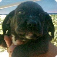 Adopt A Pet :: JASPER - Ventnor City, NJ