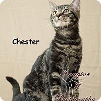 Adopt A Pet :: Chester - Oklahoma City, OK