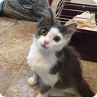 Adopt A Pet :: NJ - Tucker - Blairstown, NJ