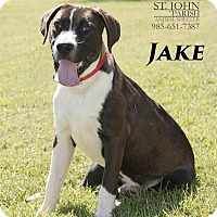 Adopt A Pet :: Jake - Laplace, LA