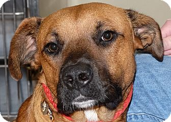 Shepherd (Unknown Type) Mix Dog for adoption in Spokane, Washington - Brees