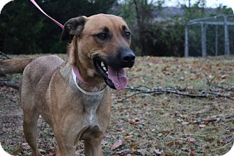 Shepherd (Unknown Type)/Labrador Retriever Mix Dog for adoption in Conway, Arkansas - Samus