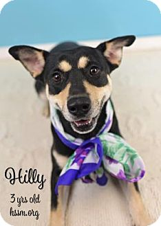 Terrier (Unknown Type, Medium) Mix Dog for adoption in Gulfport, Mississippi - Hilly (Lonely Heart)