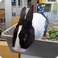 Adopt A Pet :: Lala - Los Angeles, CA