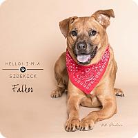 Adopt A Pet :: Falkor - Houston, TX