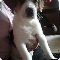 Adopt A Pet :: Gage - Attalla, AL