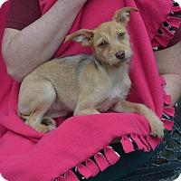 Adopt A Pet :: Willow - Lodi, CA