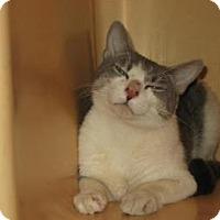Adopt A Pet :: Roscoe - Brooklyn, NY