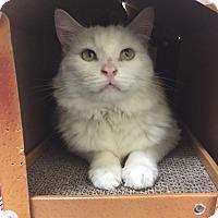 Adopt A Pet :: Tuni - Pasadena, CA