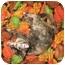 Photo 2 - Domestic Shorthair Cat for adoption in Cincinnati, Ohio - Sally