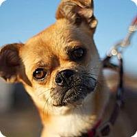Adopt A Pet :: Carmela - Sacramento, CA