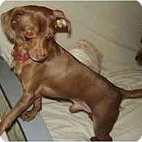 Adopt A Pet :: Paquito - Miami, FL